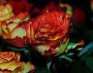 Szőregi Rózsaünnep 2013 | 2013-06-22