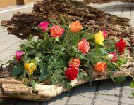 Szőregi Rózsaünnep 2013