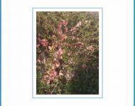 Szőregi madarak, fák – digitális fotópályázat | 2020. április 22.  szerda