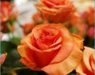 Szőregi Rózsaünnep 2007 | 2007-06-30