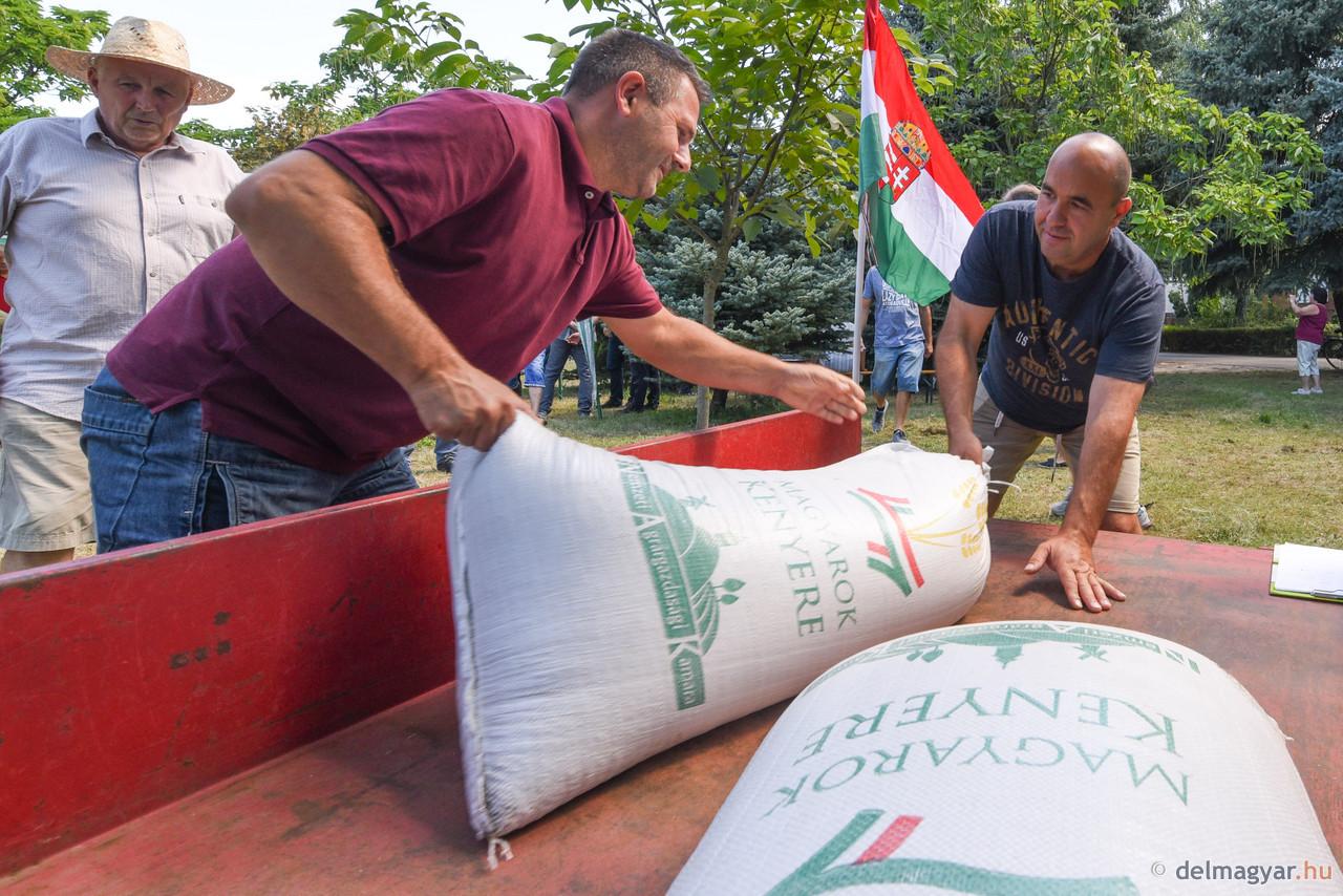 Magyarok Kenyere – 14 mázsa búzát gyűjtöttek a rászorulóknak Szeged környékén