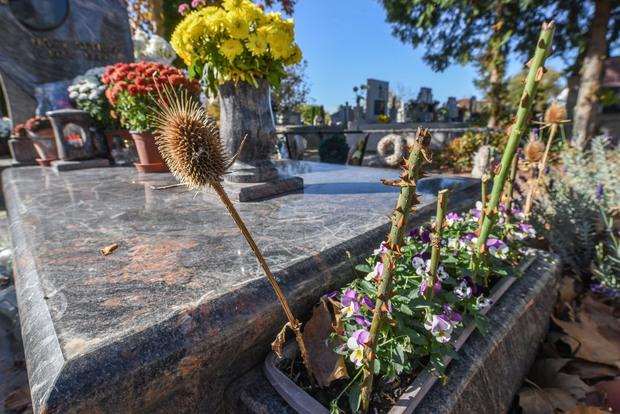 Becsukott kapuval és szúrós növényekkel védik a sírokat az őzektől Szőregen