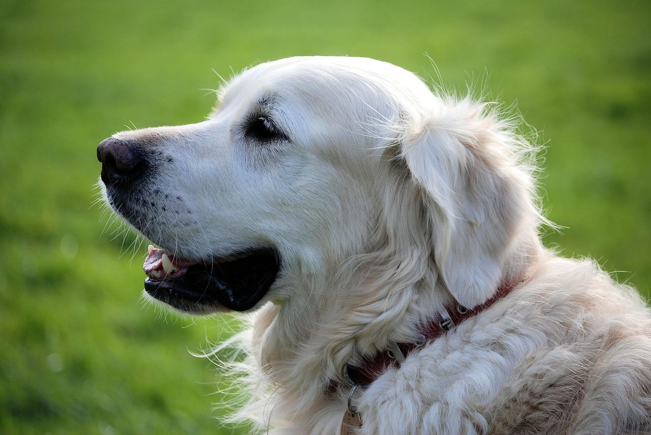 Újra összeírják Szeged kutyáit