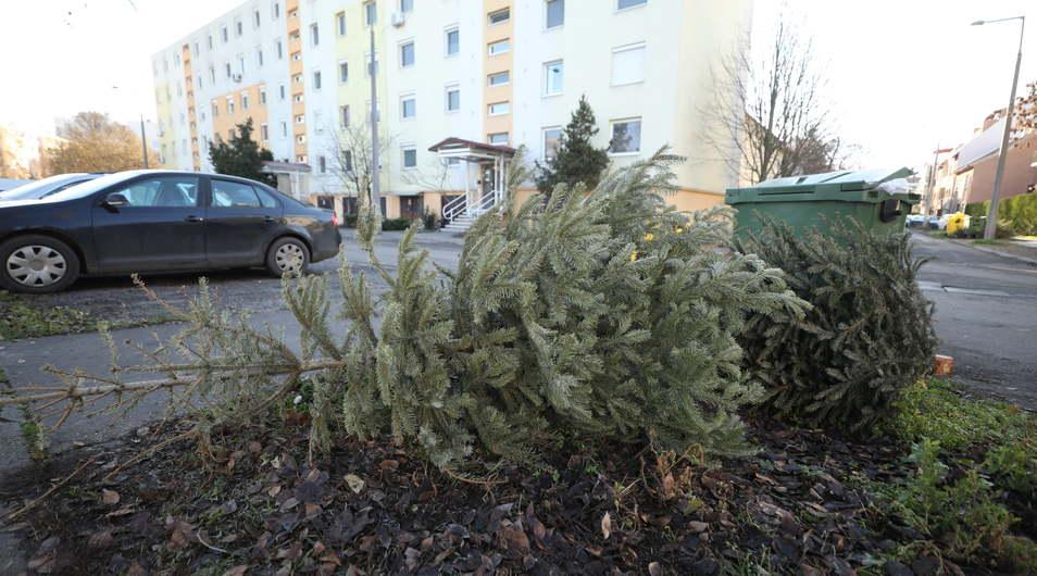 Hétfőtől elszállítják a karácsonyfákat Szegeden