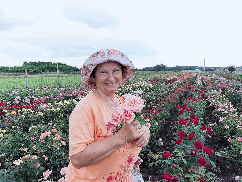 A világhírű szőregi rózsatövek titka